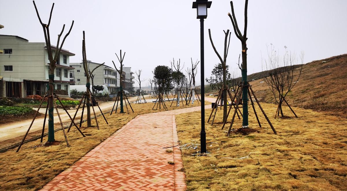 美丽乡村项目景观绿化带.jpg